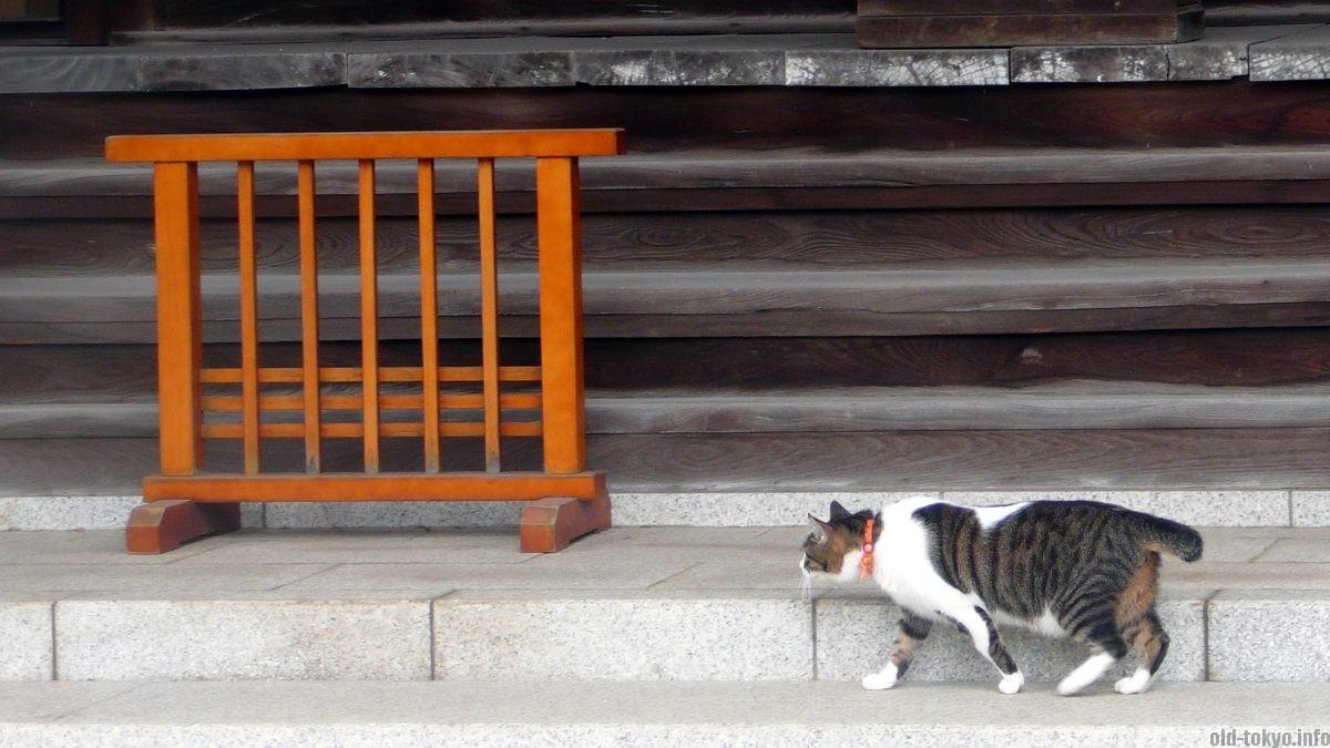 cat-daienji