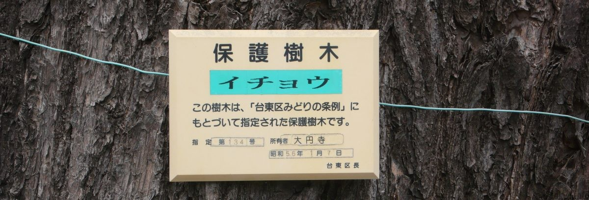 tree-daienji